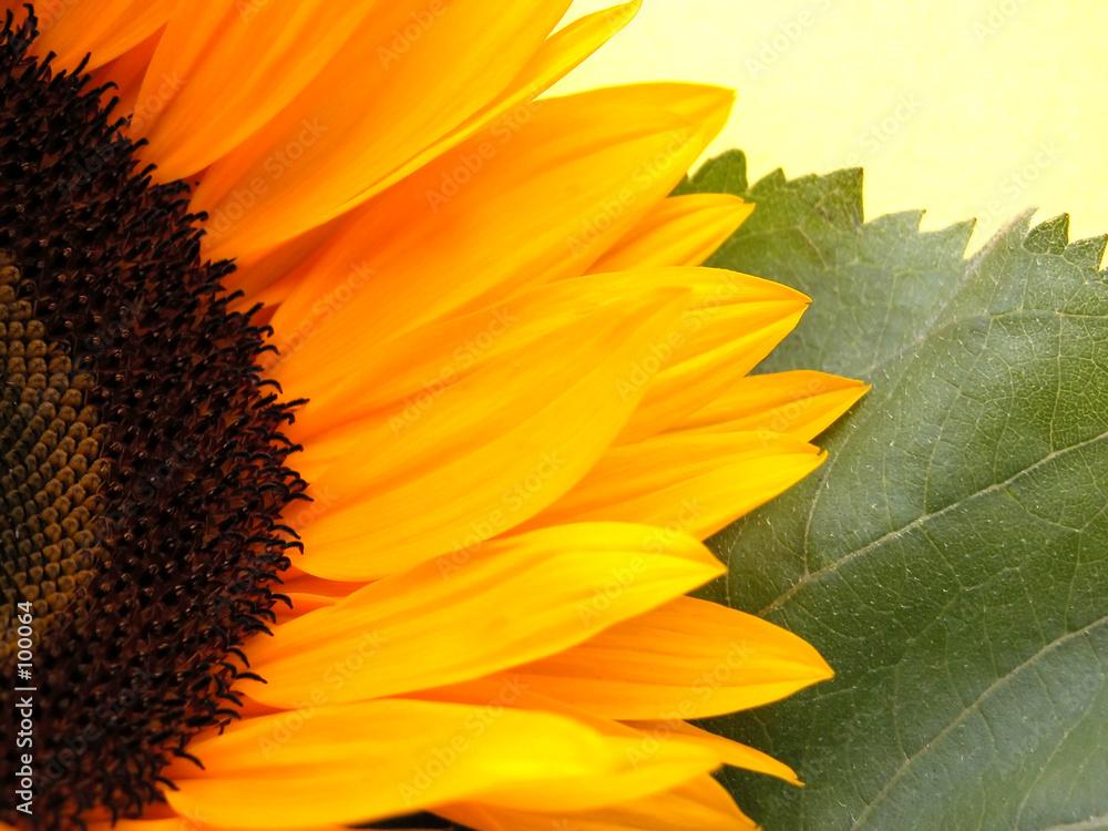 kwiat kwiat detal - powiększenie