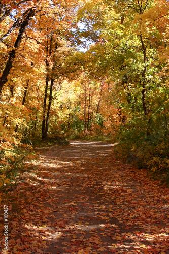 down the fall path