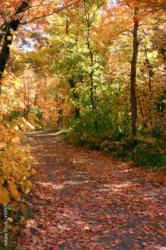 down the fall path