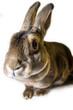nosy rabbit