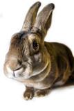 Fototapety nosy rabbit