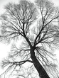 veins of the tree