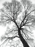 veins of the tree poster