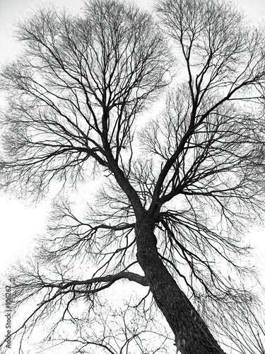veins of the tree