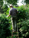 gardener on ladder
