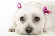 roleta: pampered pooch