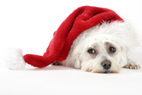 christmas pooch poster