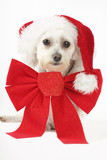 puppy for christmas poster