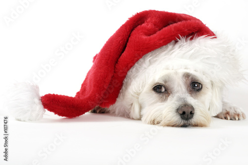 poster of christmas pooch
