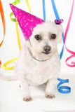 party pooch poster