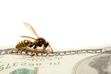 wasp on hundred dollar bill poster