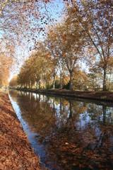 alignement et reflets d'arbres