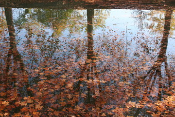 reflet et feuilles