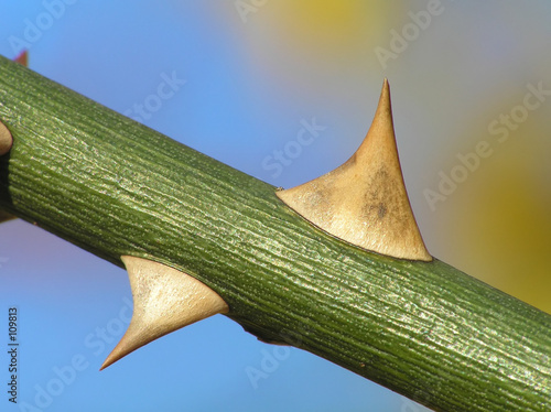 branch with rose thorns on colored background