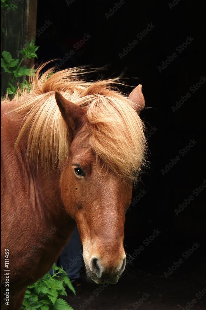 koń zwierzę zwierzę - powiększenie