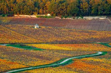 vigne au couchant