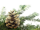 golden pine cone poster