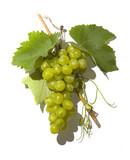 tasty wine grapes