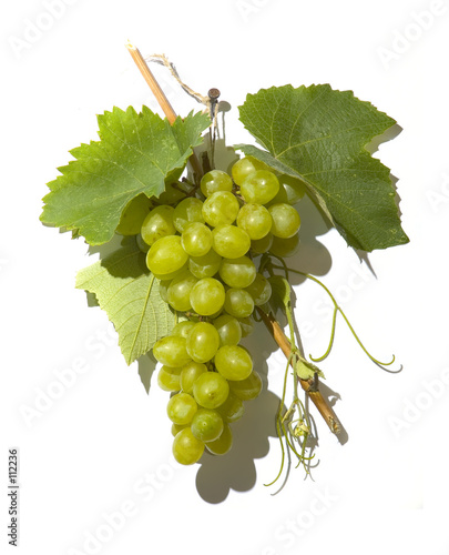 tasty wine grapes