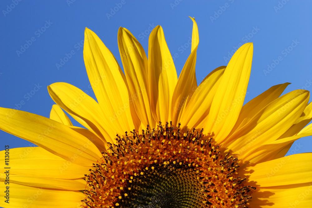 kwiat sezon uroda - powiększenie