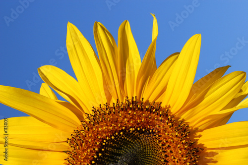 Foto op Canvas Zonnebloem sunflower sunrise