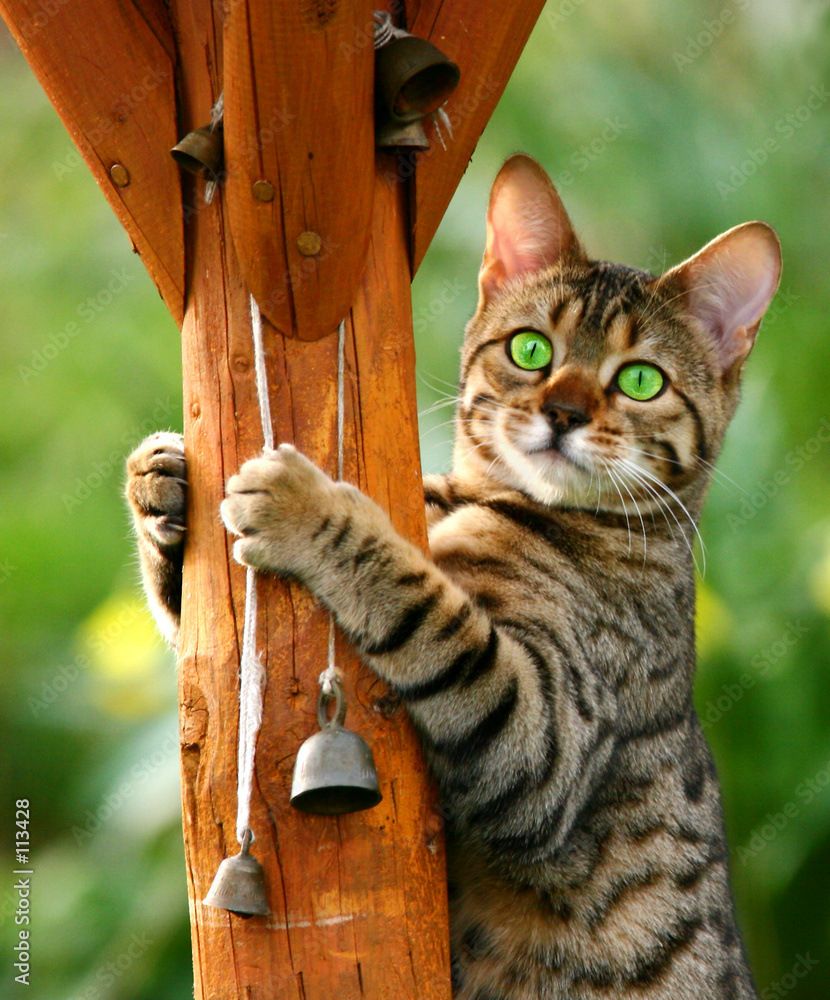 kot kociak uroda - powiększenie
