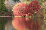 colorful tree and pond poster