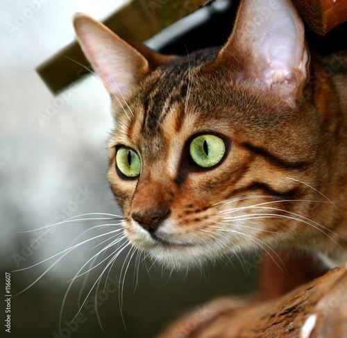 poster of killer cat