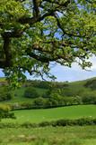 springtime meadows poster