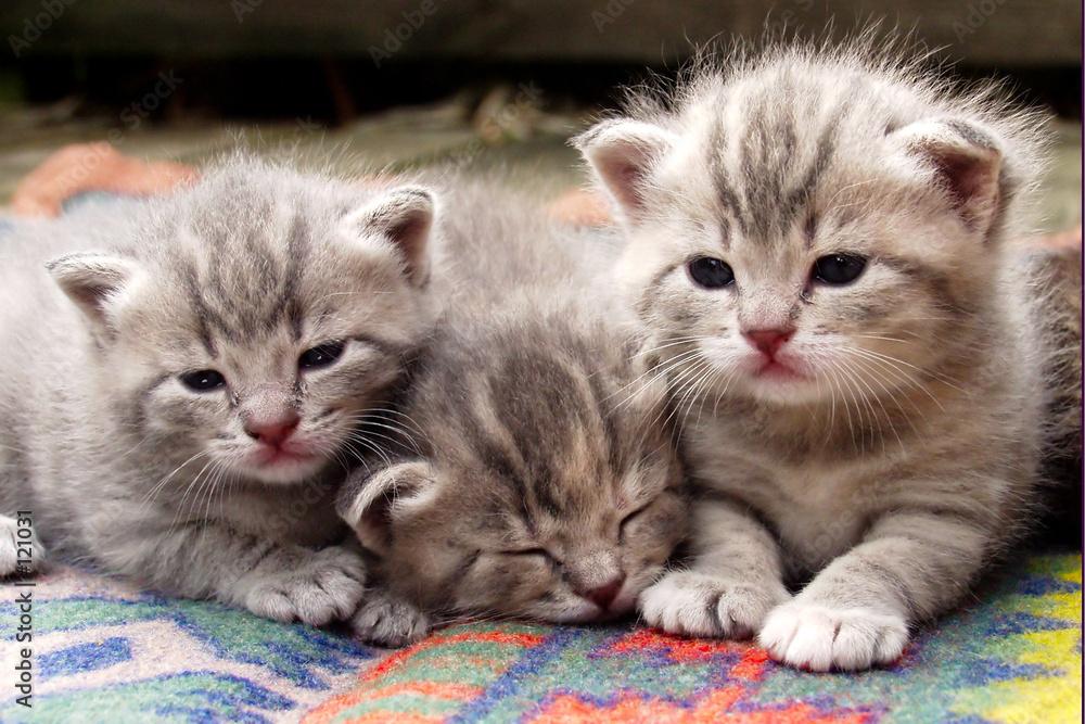 Trzy słodkie kociaki - powiększenie