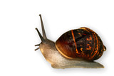the snail, slow and slimey poster