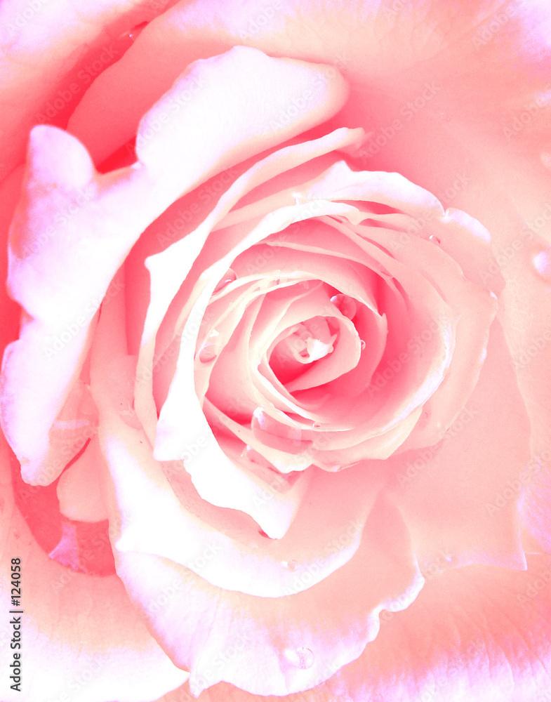 kwiat natura makro - powiększenie