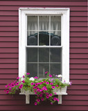 colonial home with purple flowers in flower bed poster
