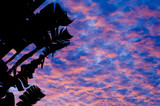 tropical sunset 1 poster
