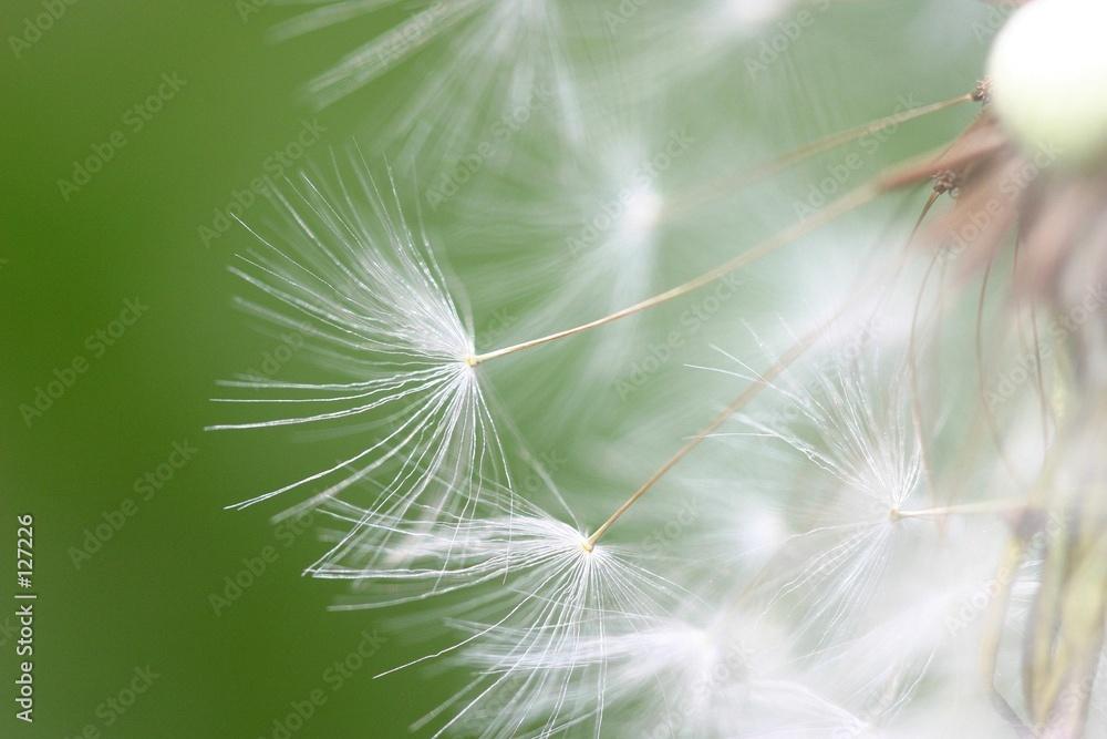 zielony rozmycie biały - powiększenie