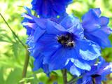 Fototapeta kwiat - makro - Kwiat