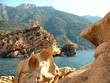 La Corse : île de beauté