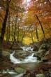 Quadro colores de otoño