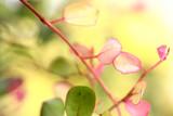 flower closeup poster