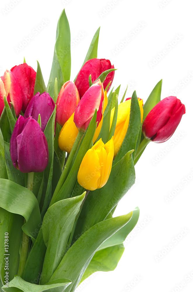 kwiat kwiat bukiet - powiększenie