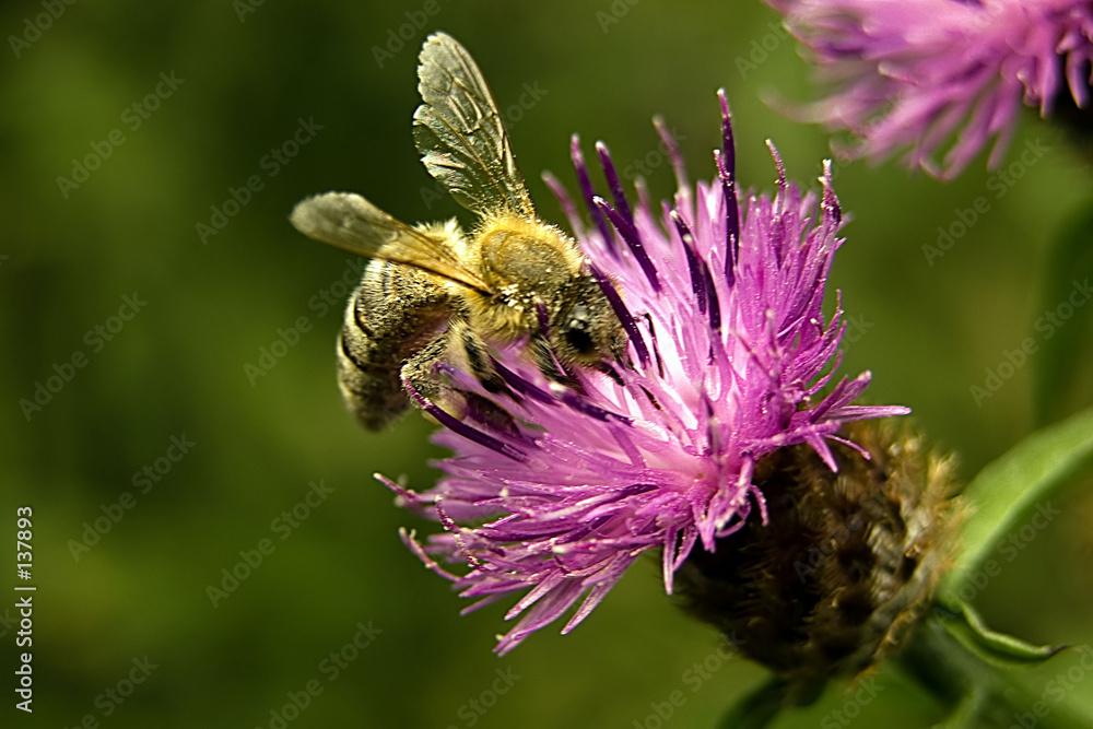 kwiat makro nektar - powiększenie