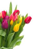 tulip bouquet - 137880