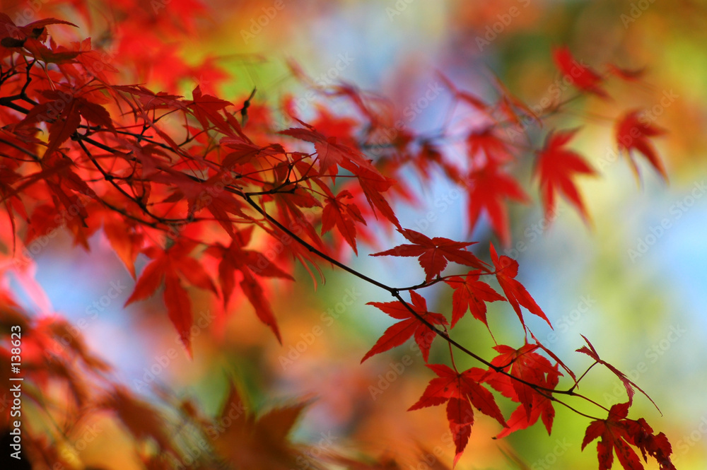 upadek japonia liść - powiększenie