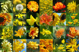 yellow flower collection poster