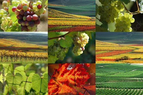 vine and vinyard collection. germany