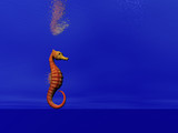 seahorse two poster
