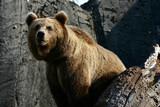 bear at the zoo poster