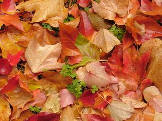 feuilles mouillées