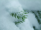 tree with snow poster