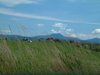 mt. mansfield vermont and vermont cows